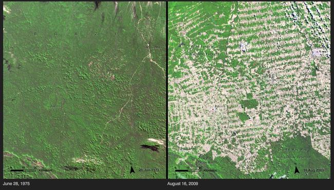 deforestation brazil