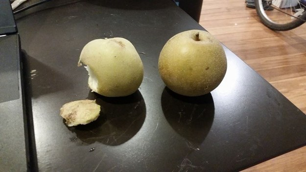 pear or potatoe